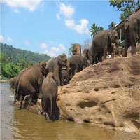 Elephant Orphanage Pinnawela