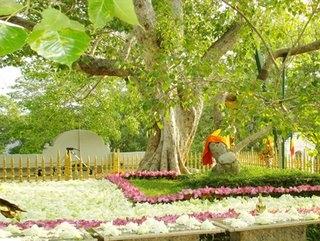 Sri Maha Bodhi Wahanse